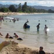 Die Pairing-Gurke auf Hawaii